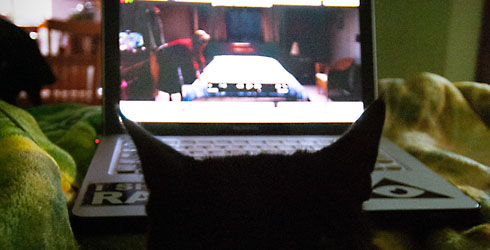 tv-cat-laptop