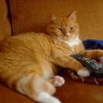 tv-cat_r_gnuce_flickr_cc-by-sa