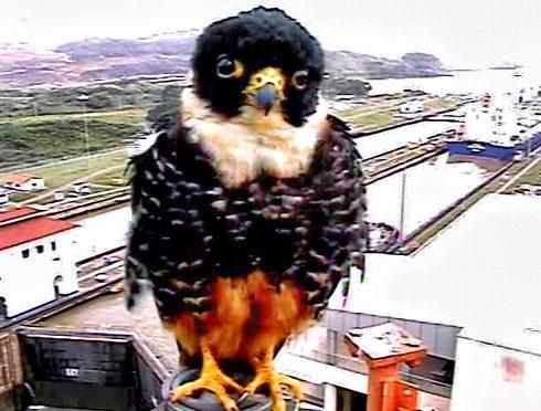 Bird (25), 2000-2019, Kurt Caviezel